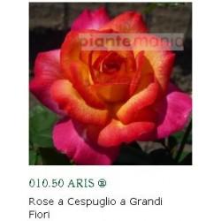 ROSA ARIS ®