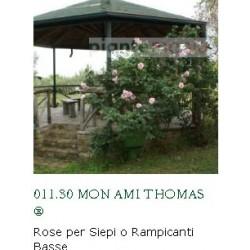 ROSA MON AMI THOMAS ®