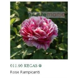 ROSA REGAS ®