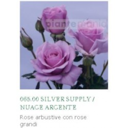 ROSA NUAGE ARGENTE ®
