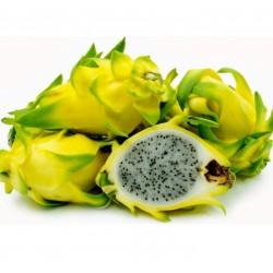 Pitaya (Dragon Fruit)