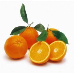 Arancio Navelina